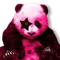 Panda Fluo